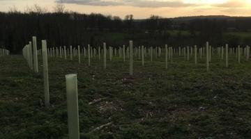 Estate Annual Tree Planting