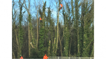 Essential Tree Maintenance - A338