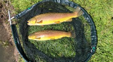 Fishery now open