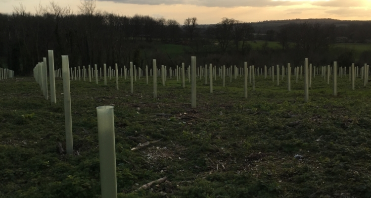 Estate Annual Tree Planting