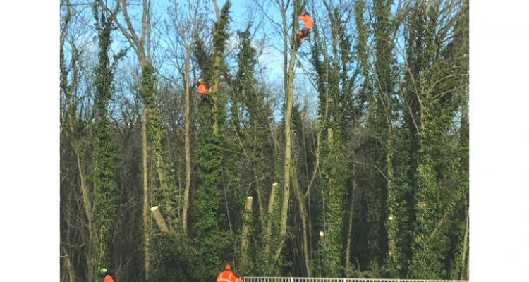 Essential Tree Maintenance - A338